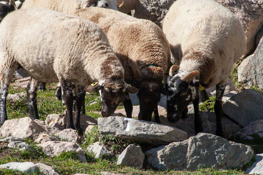 colchones naturales de lana